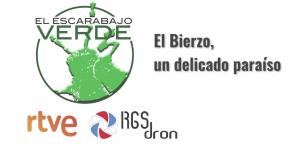 Escarabajo verde RGSDron Bierzo